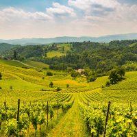 Weinberge in der Steiermark - Weinland Steiermark Radtour