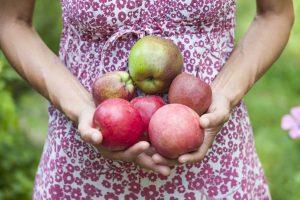 apfelernte apfelfest Apfelfahrt