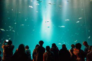 Aquarium im Ozeaneum Stralsund