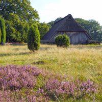 Spätsommer in der Lüneburger Heide