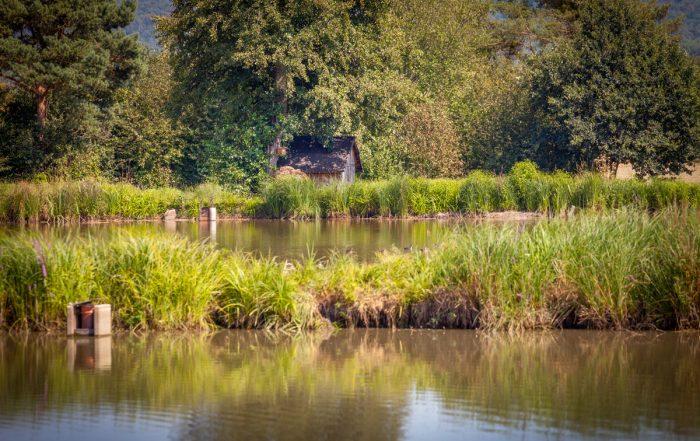 Weiherlandschaft an der Aisch - Aischtalradweg