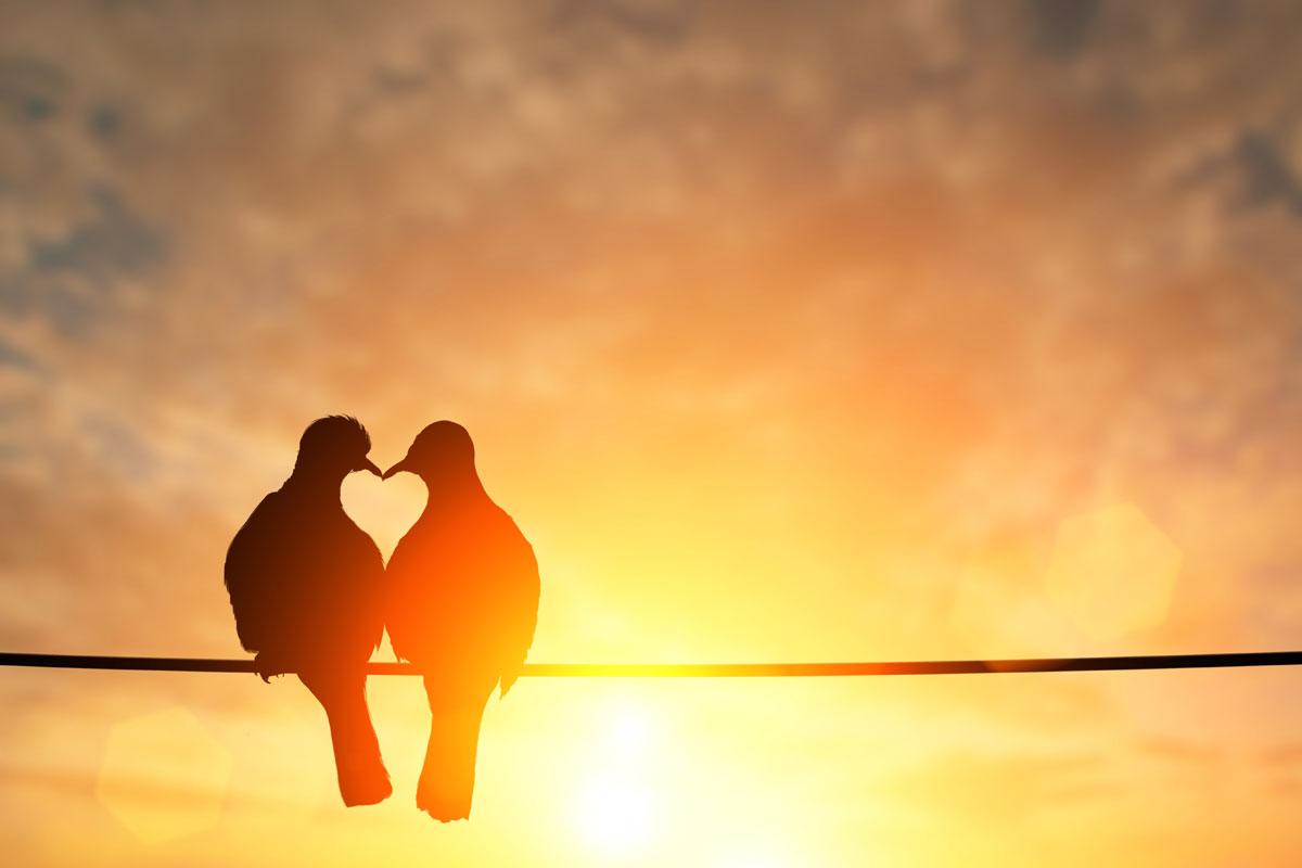 Vögel Herz Romantik