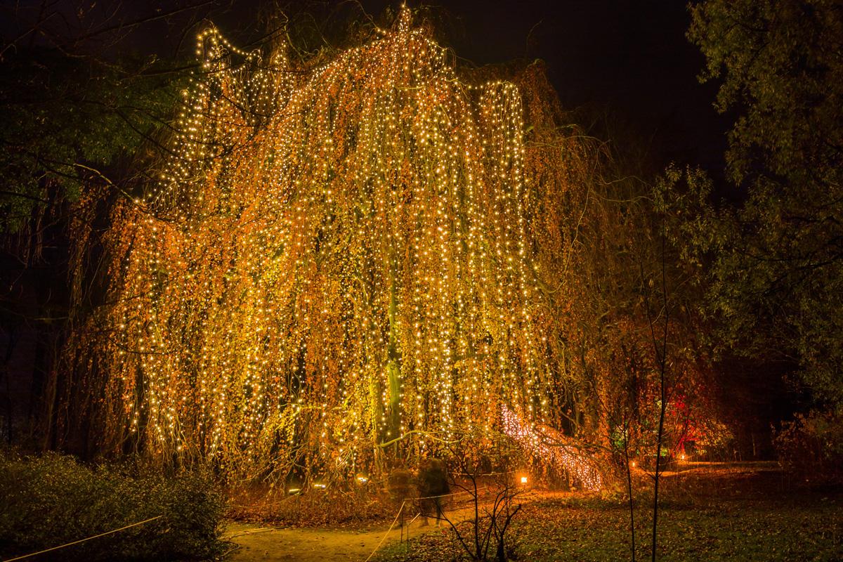 Christmas Garden Berlin, Märchenbuche