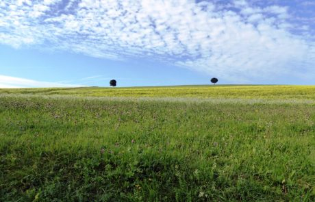 Landschaft am Mindelsee