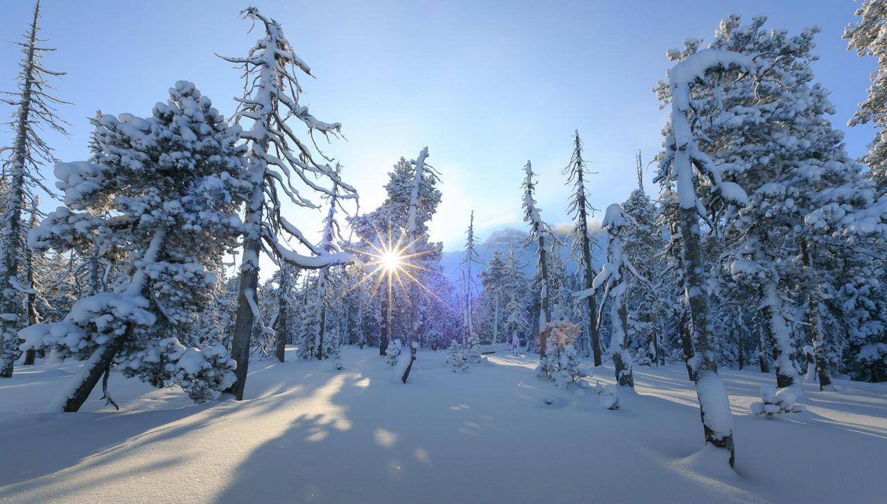 Winterstimmung im Gebiet Salwideli - Loipen in der Schweiz