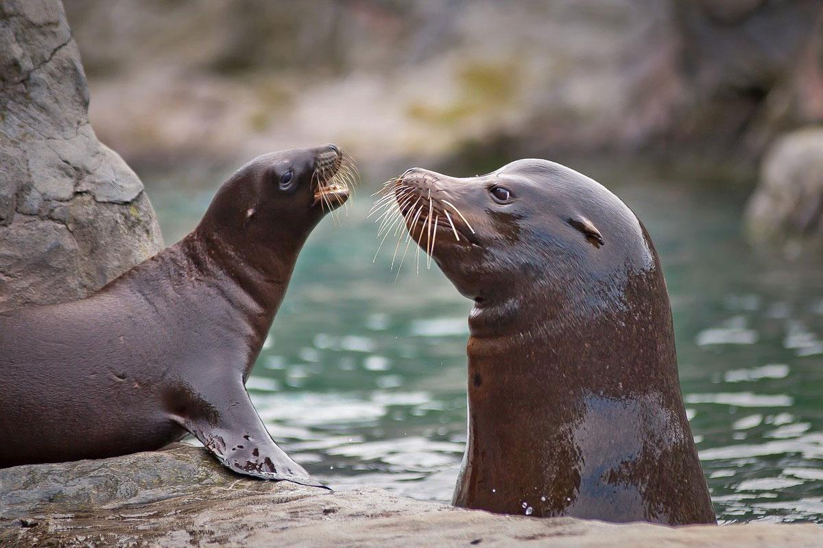 Seehunde Wasser Land