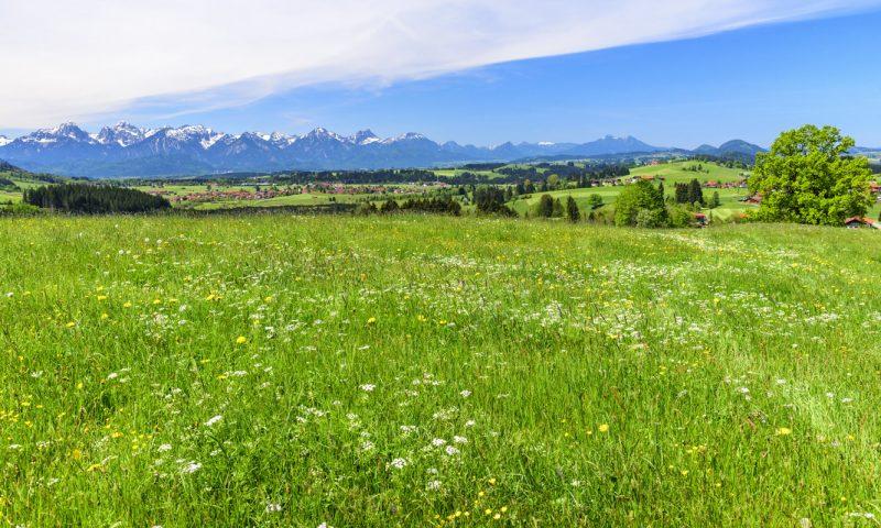 Wiese im Alpenvorland - Emmentaler-Radweg