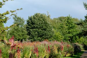 Blütenpracht im Ammerland - Ammerland-Route