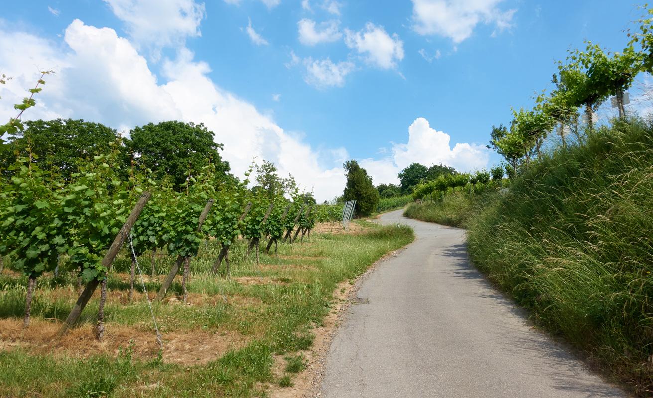 Weinberge bei Heppenheim
