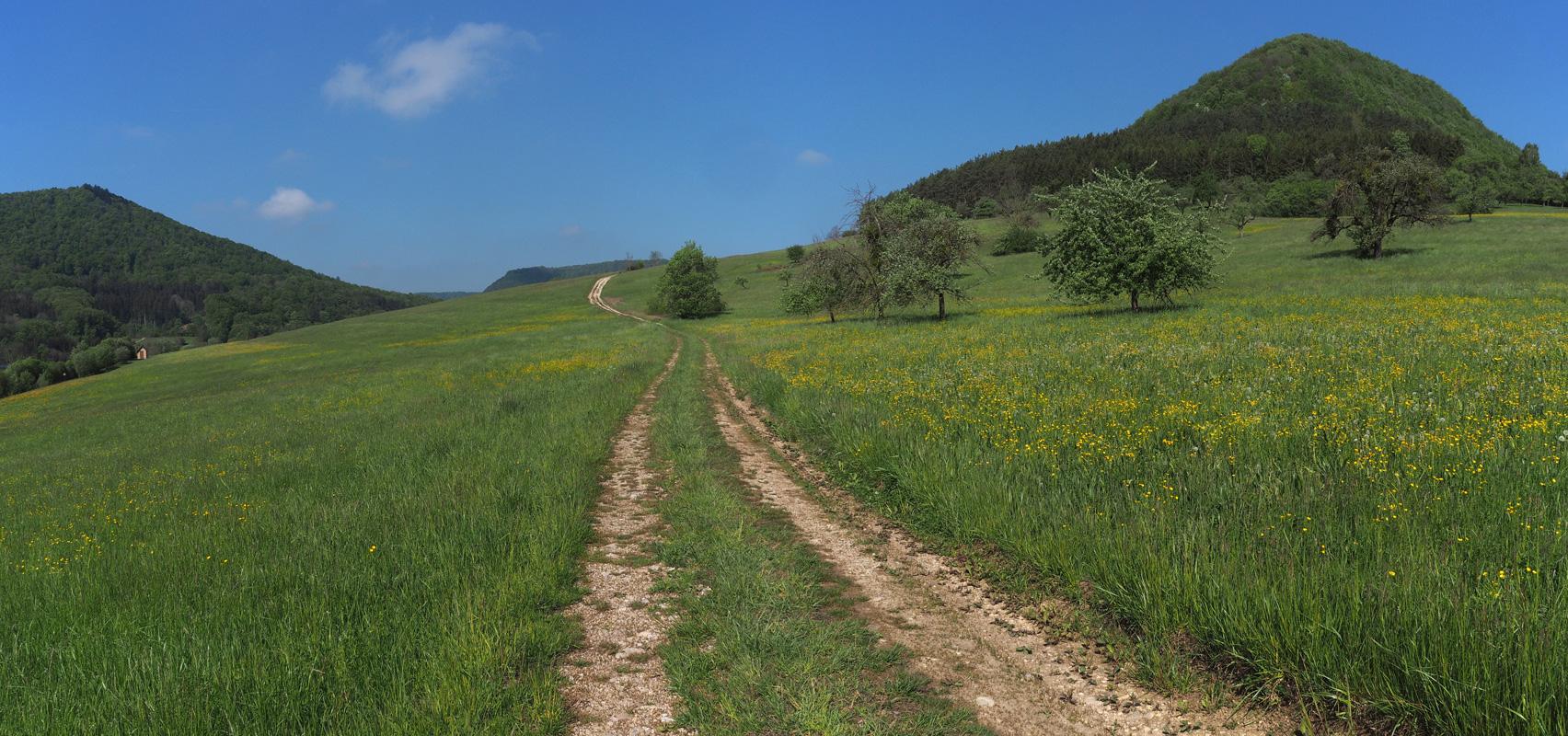 Wanderweg auf der Schwäbischen Alb