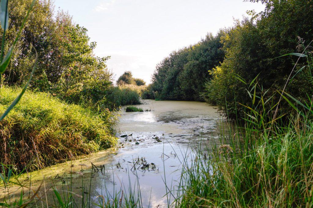 Landschaft im Südbrookmerland