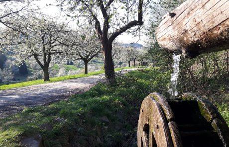 Wasserrad zur Kirschblüte