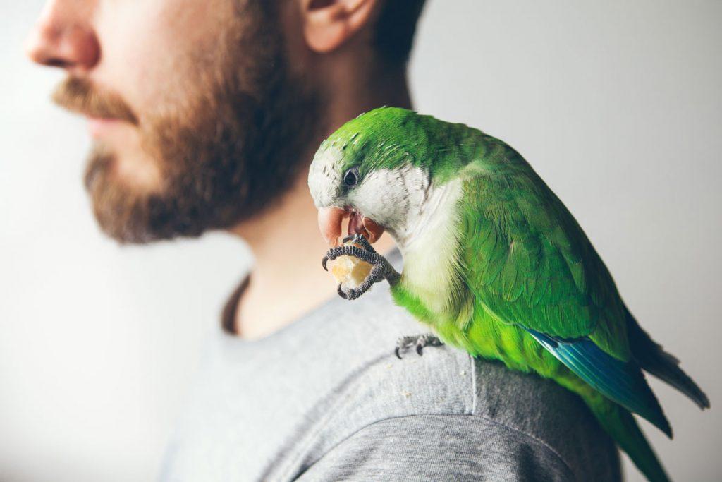 Papageiencafé in Bochum - hier geht es bunt zu