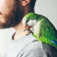 Mann mit Papagei - Papageiencafé Bochum