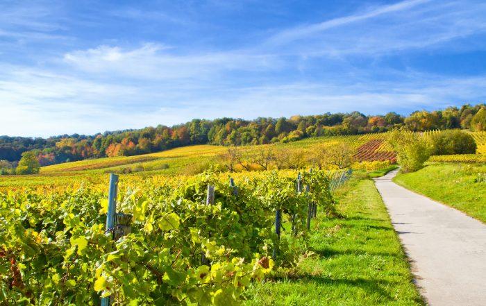 Herbstzeit in der Pfalz
