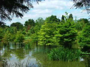 Sumpfzypressen im Arboretum Ellerhoop - Ochsenweg