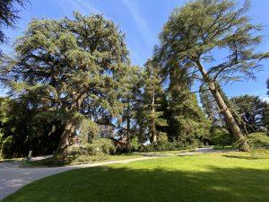 Arboretum auf der Insel Mainau