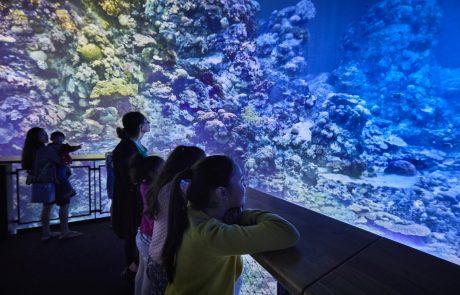 Panorama Great Barrier Reef, Gasometer Pforzheim