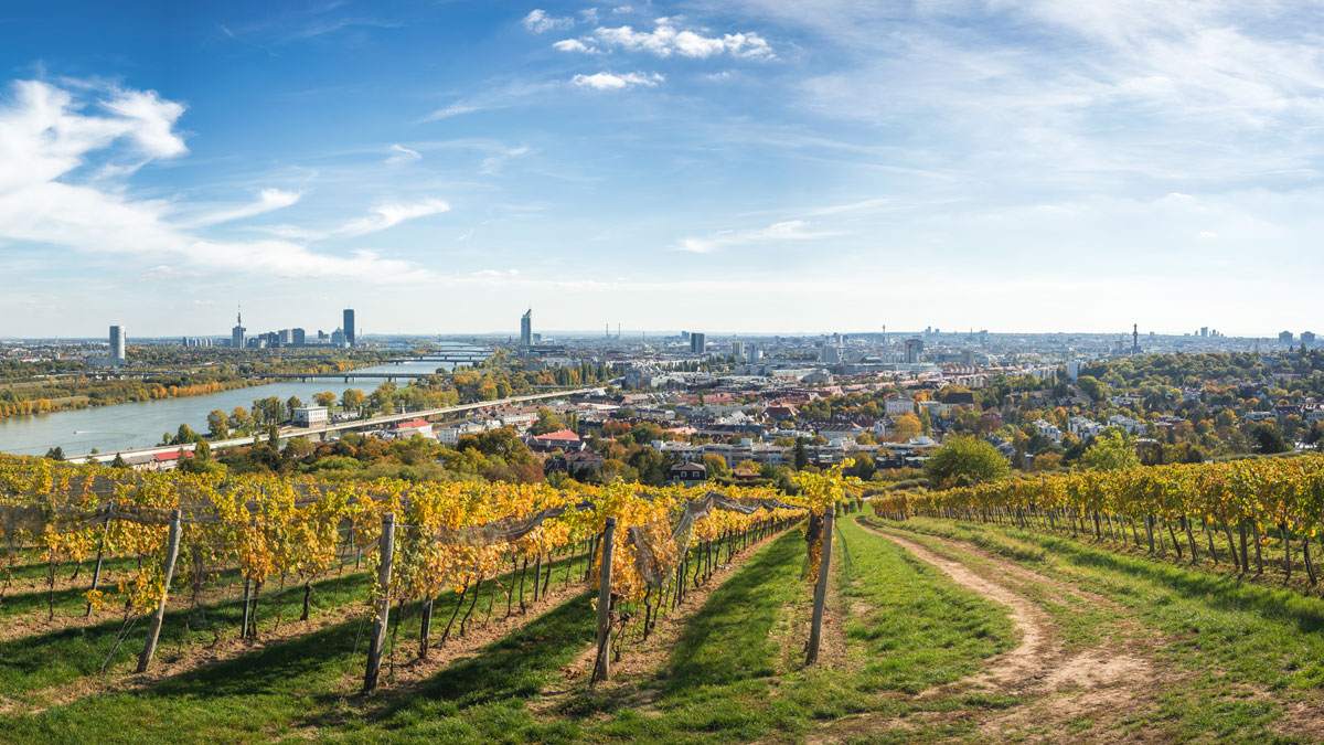 Weinberge Wien