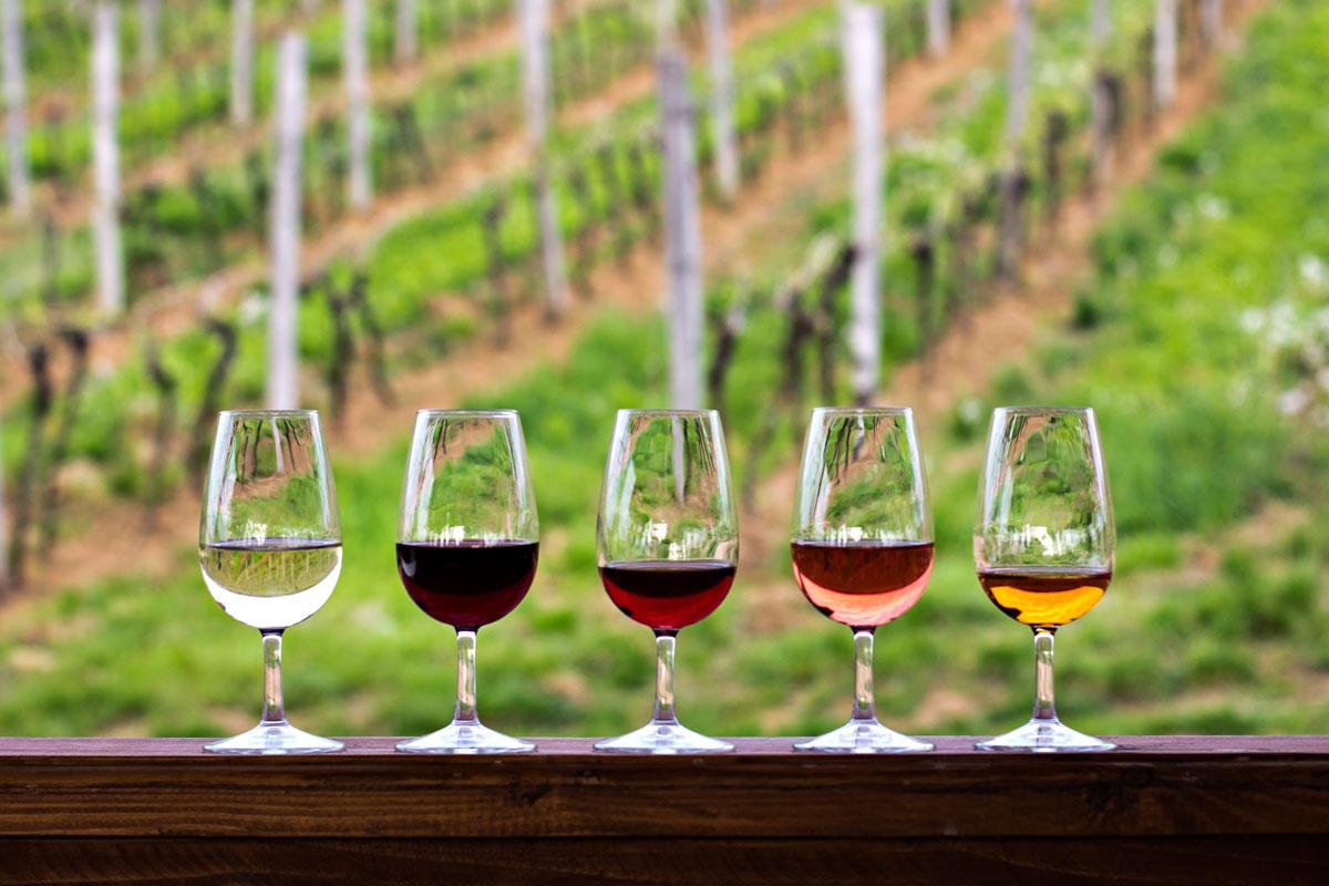 Weinverkostung Weinberge