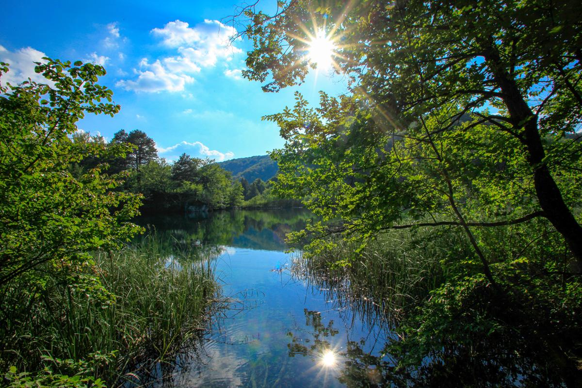 Auenlandschaft an der Donau - DonAUwald-Wanderweg