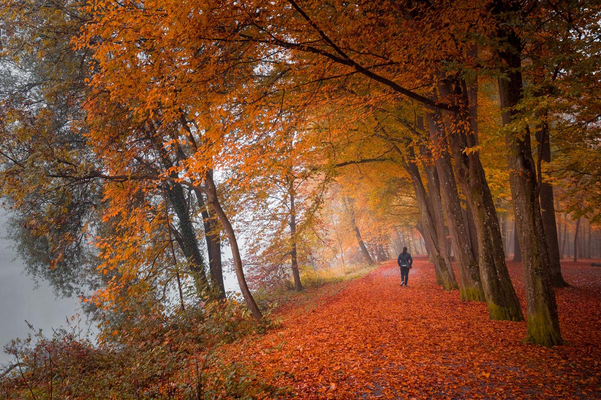 Donautal im Herbst - DonAUwald-Wanderweg