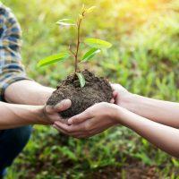 Baum pflanzen - GreenSign
