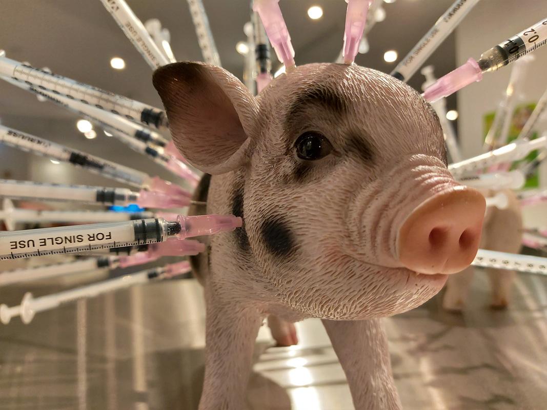 Exponat Antibiotika Schwein
