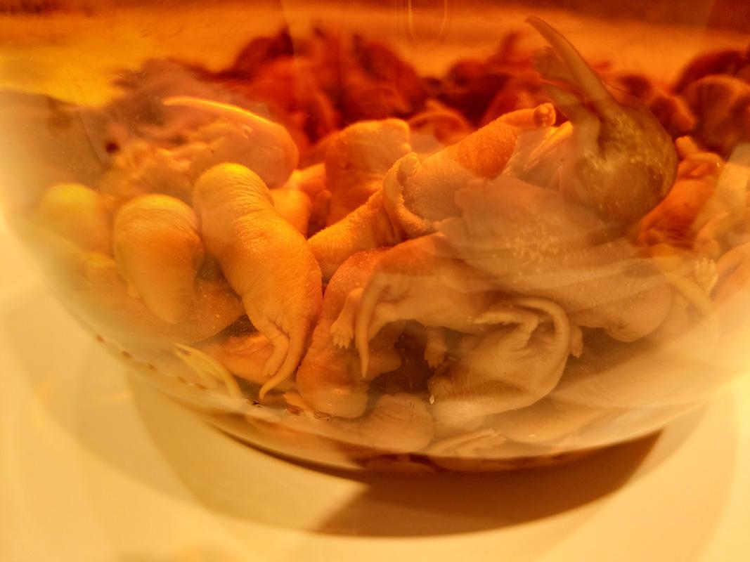 Exponat Mäusewein - Disgusting Food Museum