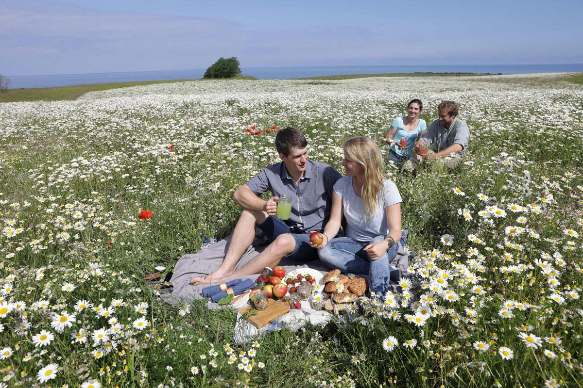 Gourmet-Picknick im Garten