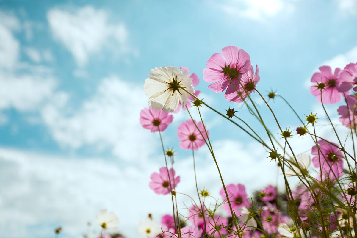 Das Blüba blüht wieder