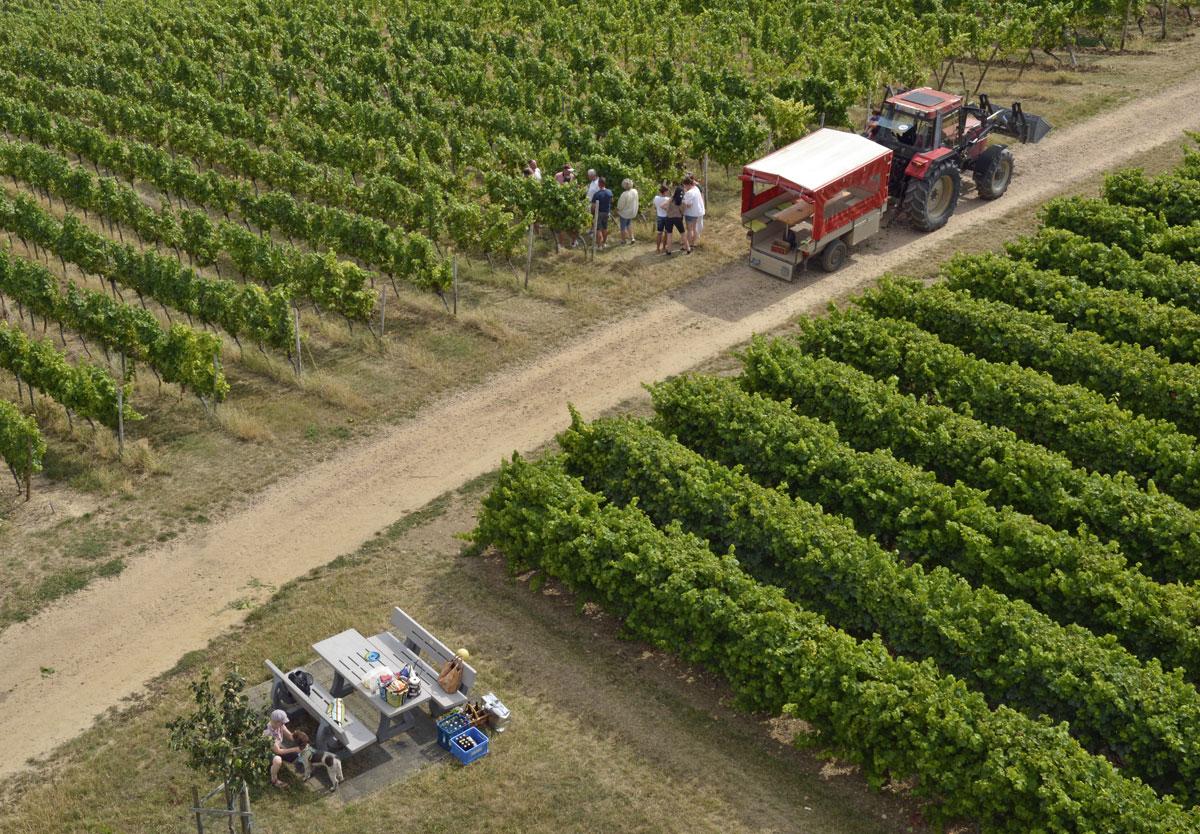 Weinberg-Express mit Weinprobe