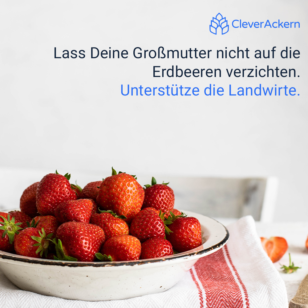Clever Ackern, Erdbeeren