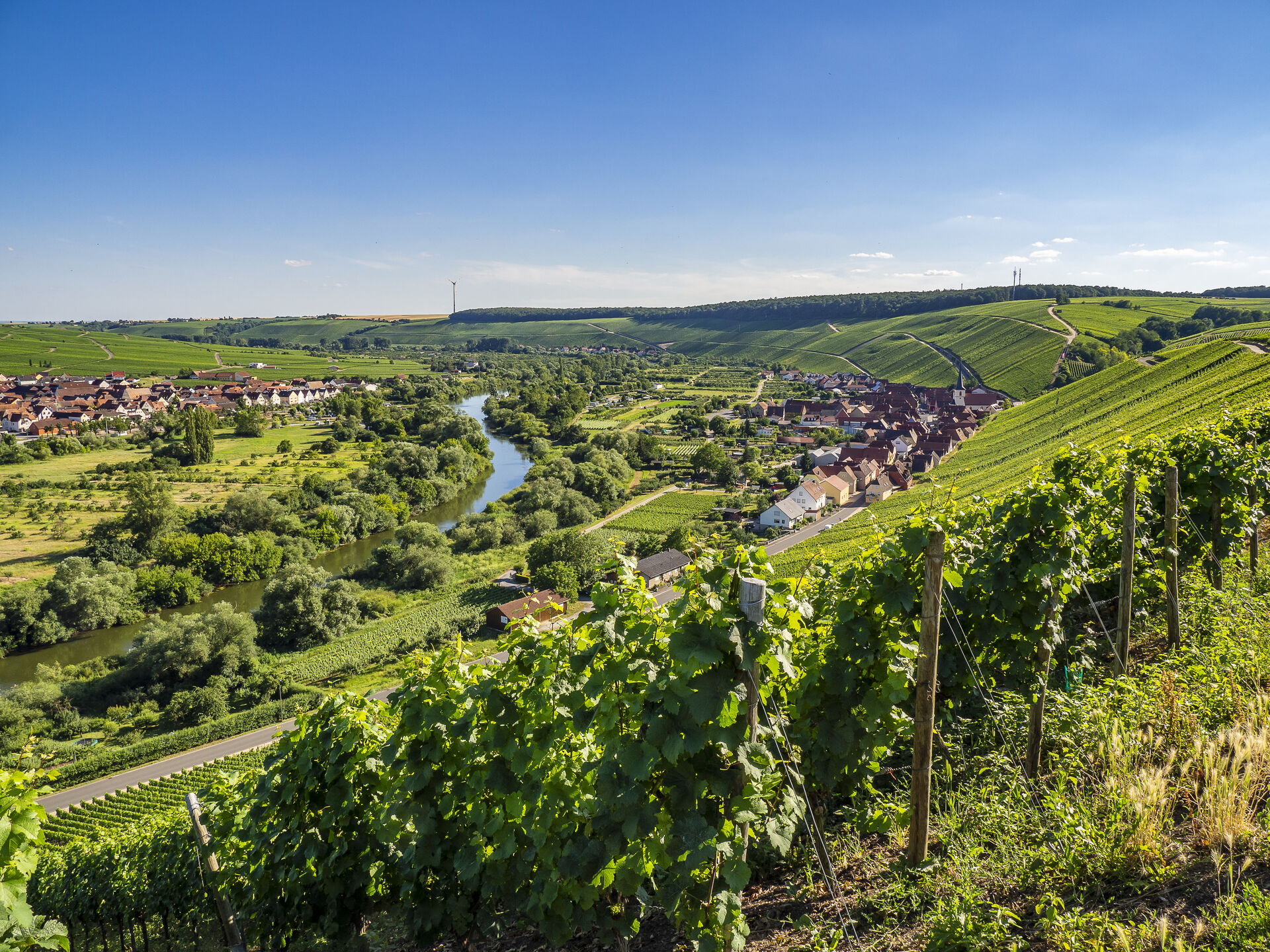 Weinberge im Weinanbaugebiet Franken bei Volkach