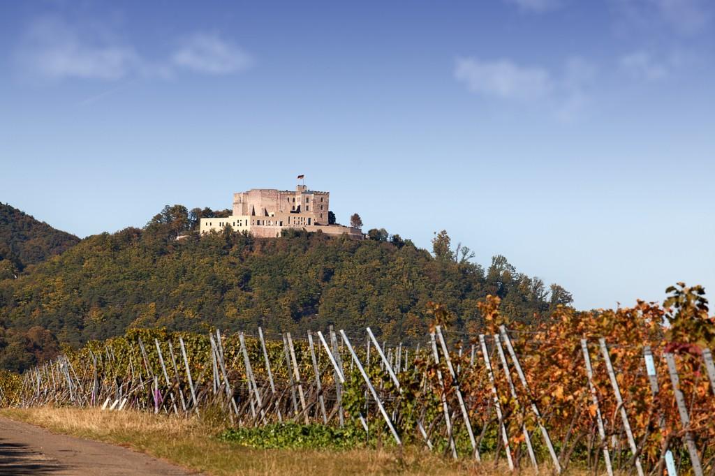 Blick auf den Pfälzer Wald mit Weinbergen und dem Hambacher Schloss - Pfälzer Weinsteig