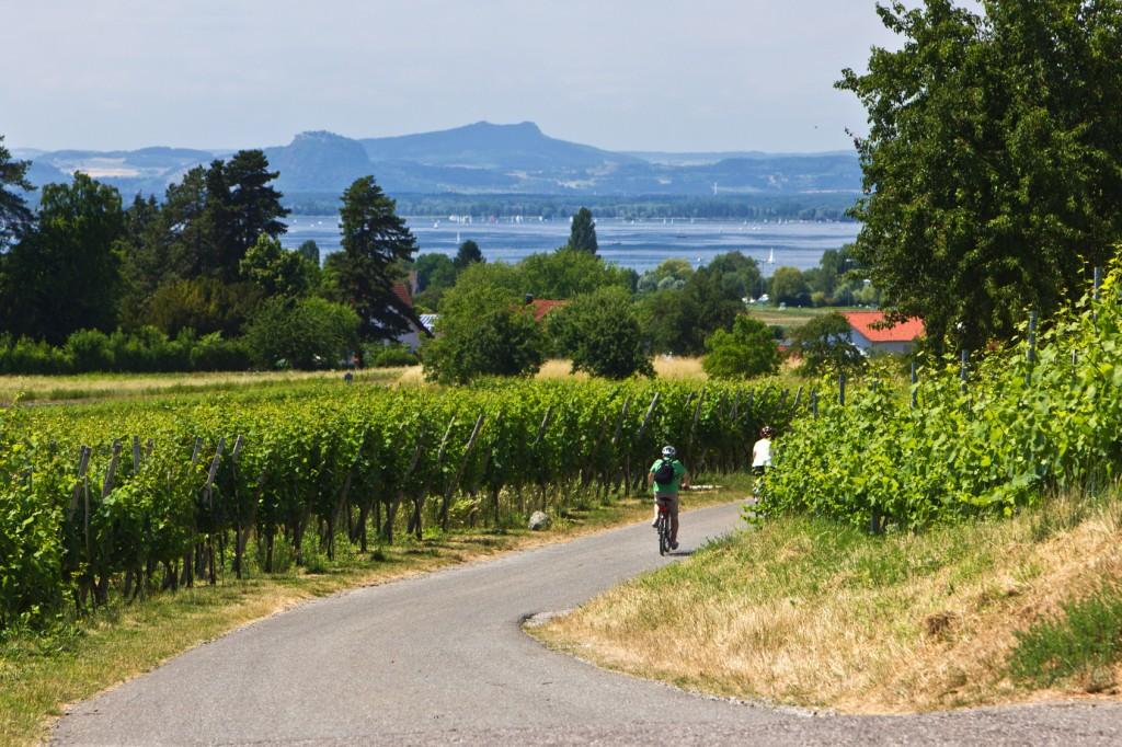 Radfahrer fahren durch Weinberge zum See