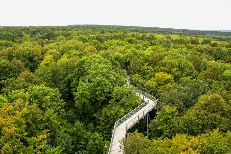 Baumwipfelweg im Naturpark Hainich in Thüringen, Thüringer Kernland