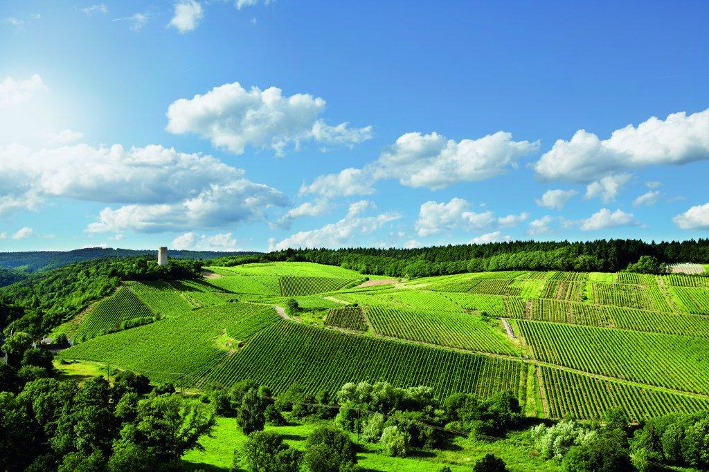 PanoramaTurm- und Gräfenberg, Weingut Robert Weil, Kiedrich/Rheingau
