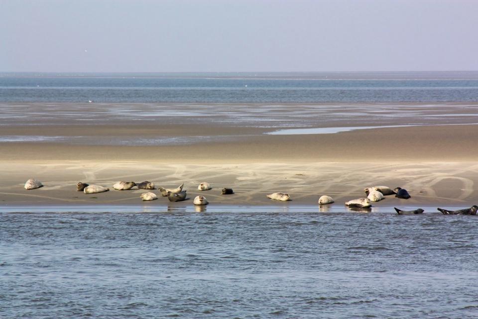 Seehunde auf einer Sandbank, Seehunde und Wal