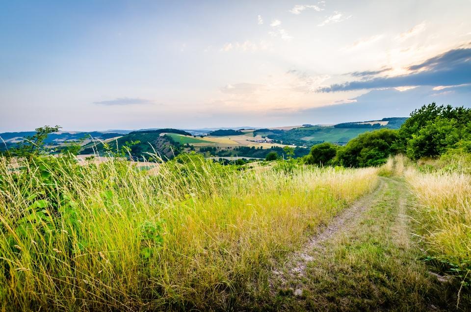 Wanderweg bei Oberhausen an der Nahe, Weinbaugebiet Nahe