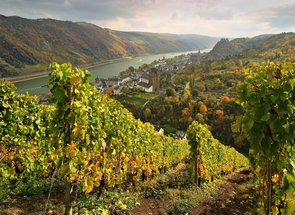 Weinberge bei Oberwesel, Weinbaugebiet Mittelrhein