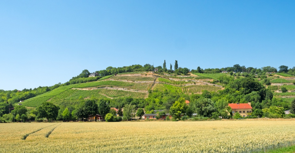 Landschaft im Weinbaugebiet Saale-Unstrut