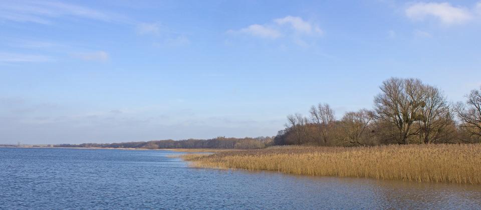 Uferzone am Kummerower See