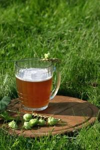 Bierkrug mit Hopfen auf der grünen Wiese im Hallertau