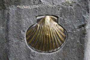 Jakobsmuschel - Symbol für den Jakobsweg