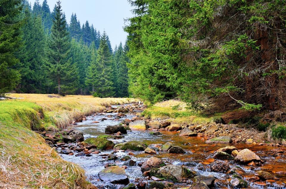 Mittellauf der Rolau im Erzgebirge bei Nove Hamry