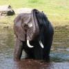 Elefant beim Baden © Serengeti-Park Hodenhagen