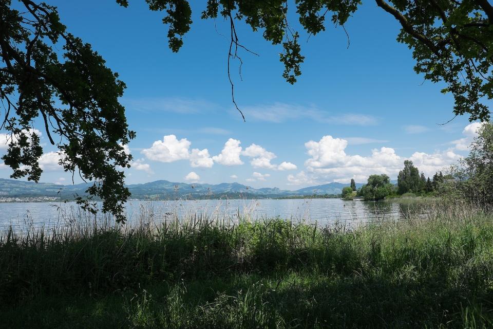 Ufer am Zürichsee, Zürich