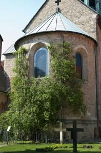 1000-jähriger Rosenstock am Dom Hildesheim